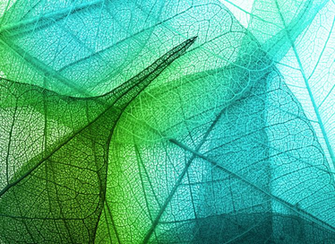 Textile Trends FallWinter 202021 Green leaf background Leaf