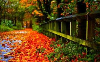 Fall Foliage Wallpapers HD
