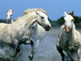 Horses Wallpapers for Desktop Backgrounds Wish you enjoy it