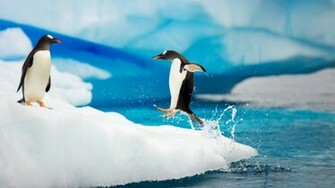 Penguin Wallpapers HD Wallpapers Desktop Wallapers High