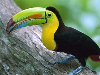 Exotic Birds Wallpapers Wallpaper Pictures