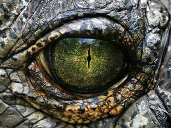 Genie Phantom Story Crocodile eyes