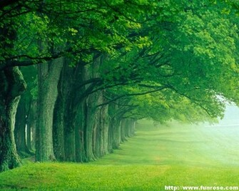 Green Nature Wallpapers For Desktop 883 HD Wallpaper 3D Desktop
