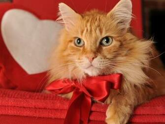 Cute kitty on Valentine Day wallpaper   ForWallpapercom