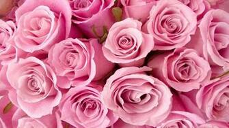 Wallpapers Special Pink Roses 1289 2560x1600 pixel Exotic Wallpaper