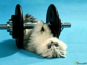 funny cute wallpapers for mobile download Cute Funny Cat Mobile