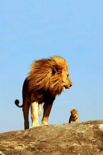 Lion King iPhone 4s Wallpaper Download iPhone Wallpapers iPad
