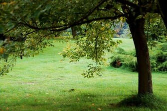 Nature background 07 by elanordh stock
