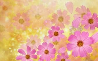 Beautiful Pink Spring Flowers Wallpaper Desktop Background