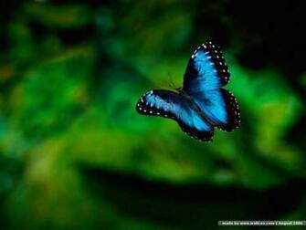 Butterfly Wallpaper Desktop 10314 Hd Wallpapers in Cute   Imagescicom