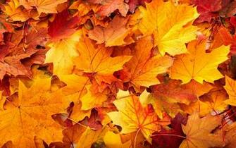 fall leaves background 20807 21344 hd wallpapers   Athens GA Weather