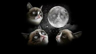 Grumpy Cat Pictures HD Wallpapers Hd Wallpapers