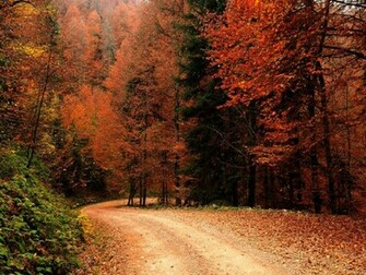 Wallpapers Autumn Fall nature nature wallpapers popular