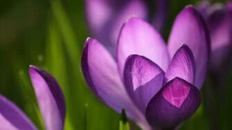 Spring flowers   Spring Wallpaper 22176446