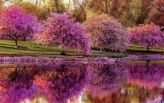 definition wallpaper abstract spring garden high resolution wallpaper