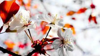 Spring Season Flowers 4K HD Desktop Wallpaper for 4K Ultra HD