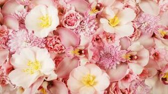Flowers Wallpapers Pink Orchids 1058 2560x1600 pixel Exotic