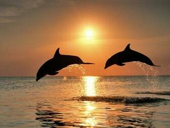 COOL WALLPAPERS bottlenose dolphins wallpapers