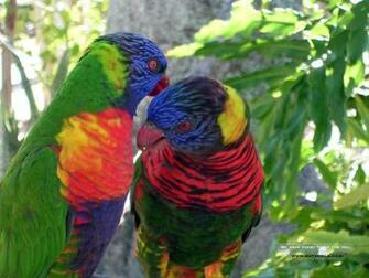 Animals Zoo Park 12 Beautiful Birds Desktop Wallpapers