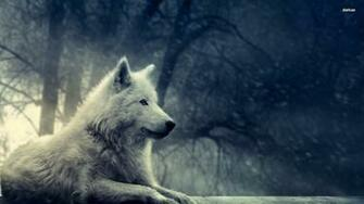 Pics Photos   Grey Wolf Wallpaper