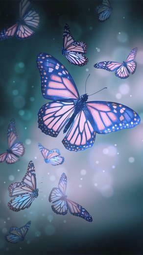 Butterfly Wallpaper EVERYTHING Just me in 2019