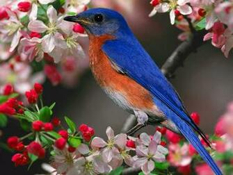 Wallpapers   HD Desktop Wallpapers Online Bird Wallpapers