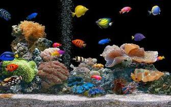 hd fish live wallpaper desktop hd fish moving backgrounds desktop hd