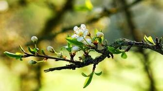 wallpaper details file name 893326 spring flower photos hd wallpapers