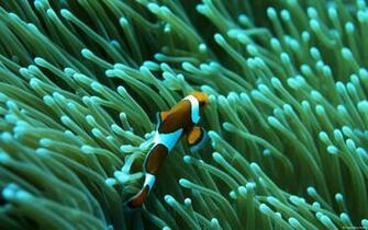 Mac Clown Fish Wallpaper by TyRRoche