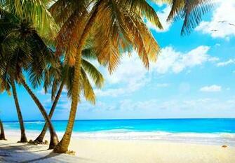palms vacation tropical sea paradise beach ocean wallpaper background