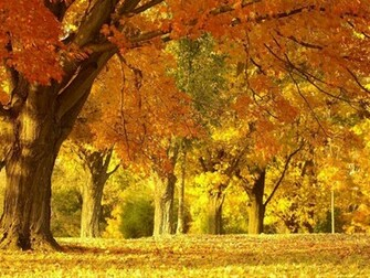 Beautiful Autumn Scenery Wallpapers   Removable Wallpapers