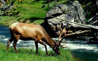 deer hd wallpapers deer hd wallpapers deer hd wallpapers deer hd