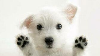 Cute Animals Wallpapers 8107 Hd Wallpapers in Animals   Imagescicom