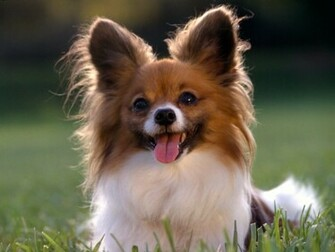 Cute Puppy Dog Wallpapers Desktop Background Wallpapers