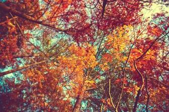 autumn leaves wallpaper by venomxbaby