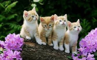 Kitten achtergronden jonge katjes hd kittens wallpapers foto 9jpg