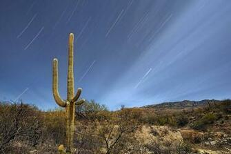 saguaro National Park Tucson Arizona Wallpapers HD Desktop