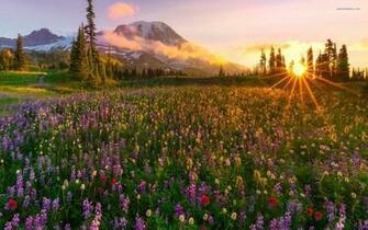 Lavender Field Lovely Sunrise wallpapers Lavender Field Lovely