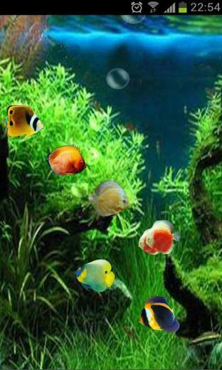 Download Fish Tank 3D Live Wallpaper for android Fish Tank 3D Live