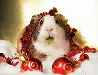 Christmas Animals Cute Funny New Images Funny And Cute Animals