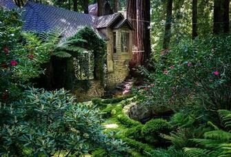 Wallpapers California USA Redwood National Park Nature Parks Trunk