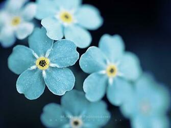 60 Beautiful Flowers Wallpapers [Wallpaper Wednesday]   Hongkiat