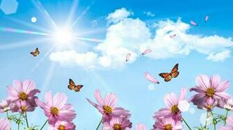 Wallpaper HD Hello Spring Spring wallpaper Butterfly wallpaper