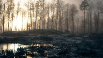 11 Fantastic HD Swamp Wallpapers   HDWallSourcecom