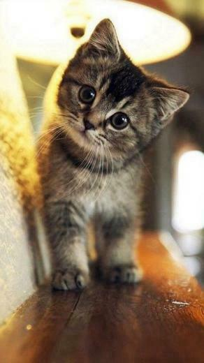 Cute Cat Wallpaper iPhone iPhoneWallpapers Cute cat wallpaper