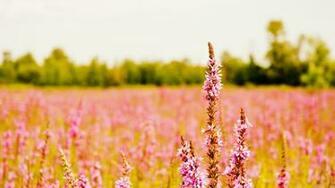 Flower Wallpaper High Resolution
