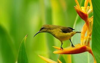 Sparrow Bird Nature Desktop HD Wallpaper   StylishHDWallpapers