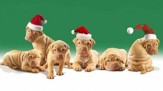 Cute Christmas Dog   Wallpapers Pictures Pics Photos Images