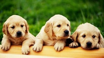 Cute Puppies HD Wallpapers Collection Download Wallpapers in HD