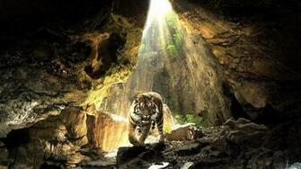Download Wallpaper A big tiger in a cave   Wild animal wallpaper